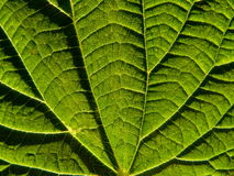 Leaf of the nettle Stock Photos