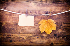 Leaf and notes posted where. Royalty Free Stock Photo