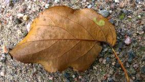 Leaf Number Six Stock Photo