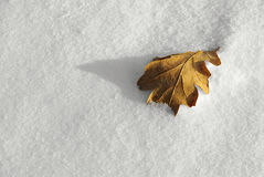 Leaf oak. Still Life with an oak leaf in the snow Royalty Free Stock Photos