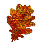 Leaf oak. Bright red oak leaf with veins like watercolor on a white background. Vector illustration Royalty Free Stock Image