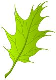 Leaf of oak Iberian,  Royalty Free Stock Photography