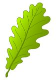 Leaf of oak tree Stock Image