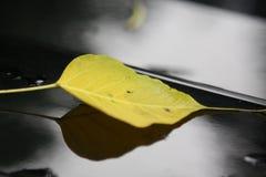 Leaf och skugga Arkivfoton