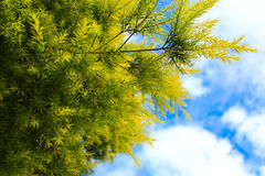 Leaf och sky Arkivfoto