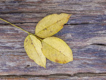 Leaf on old wooden plank texture Royalty Free Stock Photos