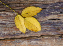 Leaf on old wooden plank texture Stock Photos