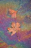 Leaf, olja och vatten Royaltyfri Fotografi