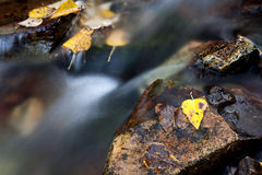 Leaf On Rock By Stream. Stock Image
