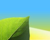 Leaf On Yellow Blue Background Stock Image