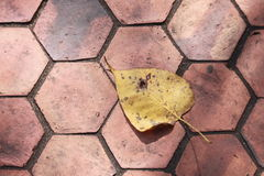 The Leaf Stock Photography