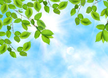 Leaf opposite sun and sky Royalty Free Stock Photography