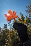 Leaf. Orange leaf in hand on sky background Royalty Free Stock Images