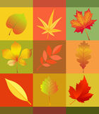 Leaf, Orange, Maple Leaf, Flower Royalty Free Stock Images