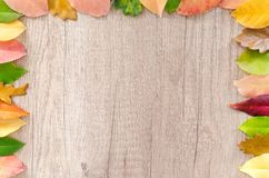 Leaf, Orange, Petal, Flower Royalty Free Stock Photography