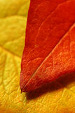 Leaf over leaf Royalty Free Stock Images