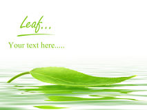Leaf over the water. Single green leaf over the water Royalty Free Stock Photo