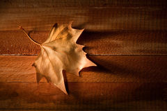 Leaf over wooden background Stock Photography