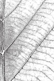 Leaf Overlay Texture Royalty Free Stock Image