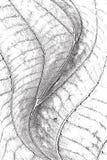 Leaf Overlay Texture Stock Photos