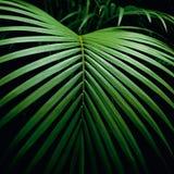 Leaf på black Royaltyfria Foton
