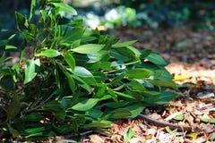 Leaf på det slipat Arkivfoto
