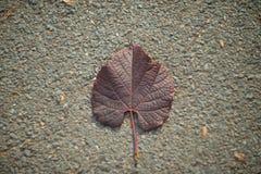 Leaf på det slipat Royaltyfria Foton