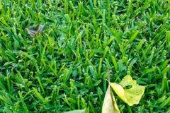 Leaf på ett gräs Royaltyfri Bild