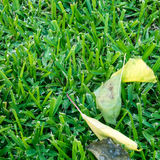 Leaf på ett gräs Royaltyfria Foton