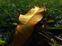 Leaf på gräs Arkivfoto