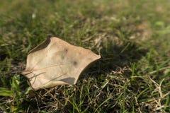 Leaf på gräset Royaltyfri Foto