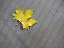 Leaf på jordningen Royaltyfri Foto