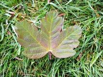Leaf på slipat Royaltyfria Bilder