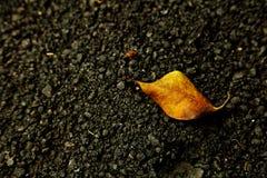 Leaf på svart Arkivbilder