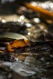 Leaf på vatten Arkivbilder
