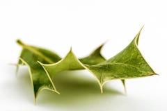 Leaf på vitbakgrund Royaltyfri Foto