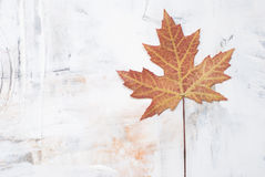 Leaf on painted background Royalty Free Stock Photo
