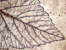 Leaf painted on ceramics surface Stock Photos