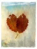 Leaf Painting 3. Photo based mix medium image of twin leaves in an abstract background Stock Photos