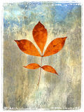Leaf Painting 4. Photo based mix media image of a branch with 5 leaves Stock Photography