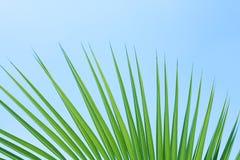 Leaf of palm. Palm leaf on a blue background vector illustration