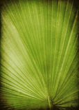Leaf palm Royalty Free Stock Photo