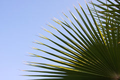 Leaf of palm Stock Image