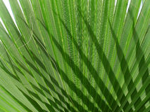 Leaf of palm. Shadow of palm royalty free stock photo