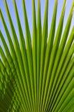 Leaf of palm tree Stock Photo