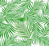 Leaf of palm tree background Royalty Free Stock Image