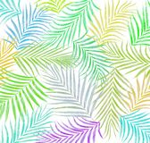 Leaf of palm tree background Stock Photography