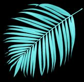 Leaf of palm tree on black Stock Photo