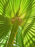 Leaf of palm tree Stock Image