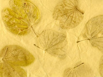 Leaf paper Stock Photography